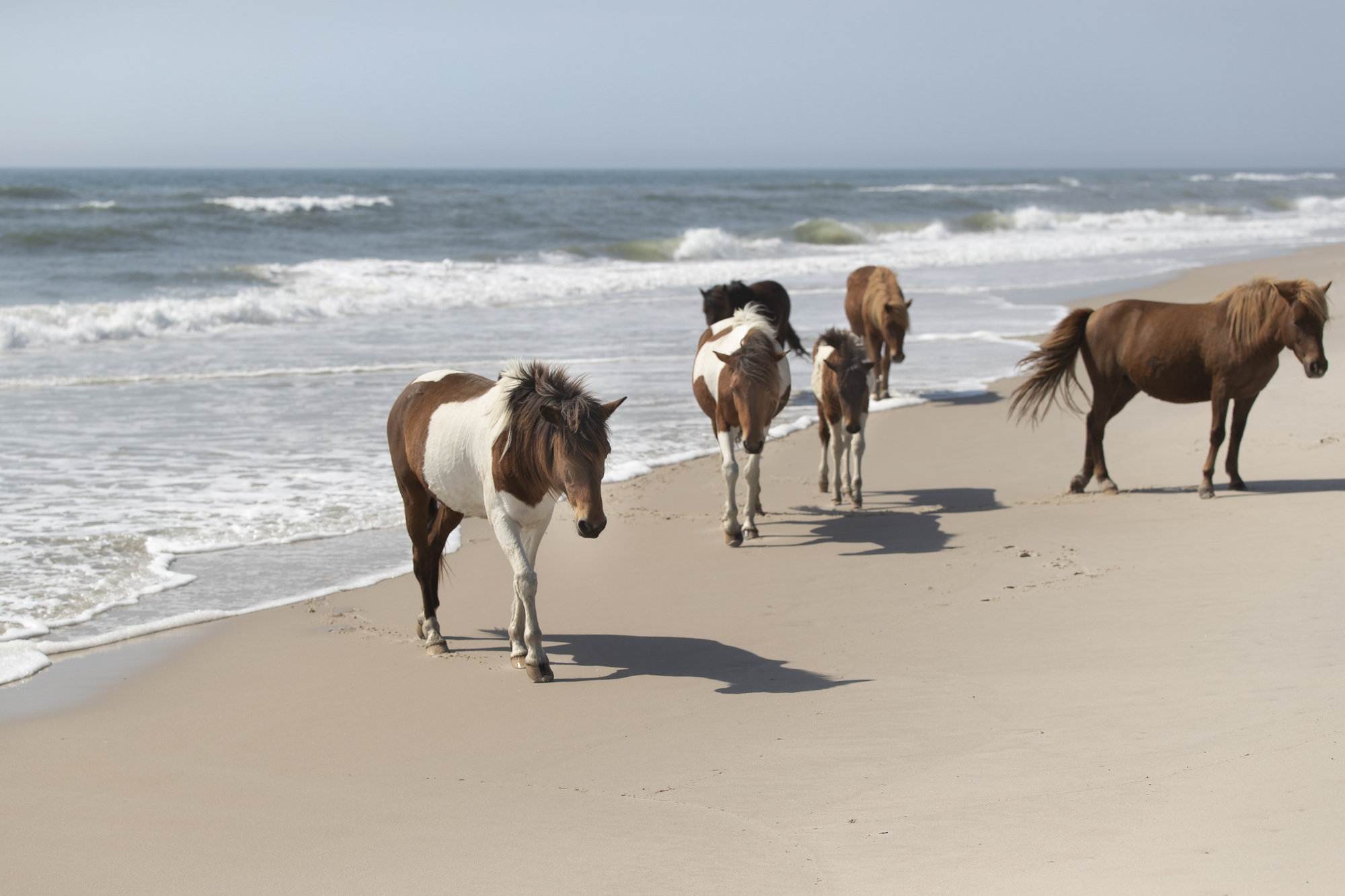 Assateague Island, MD